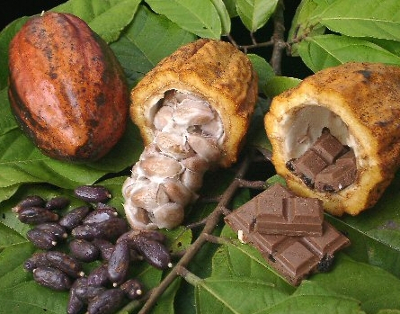 Cacao beans and processed chocolate (image found at library.thinkquest.org)