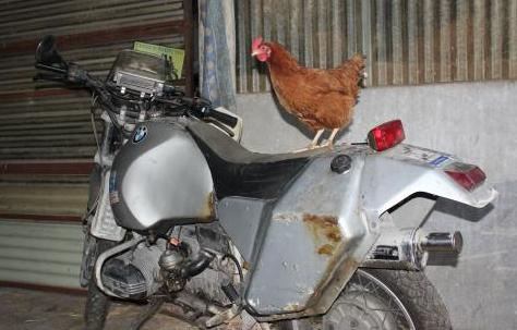 Do you get the chicken as well, when you buy the bike?