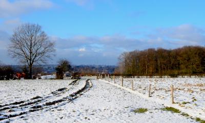 Landscape near Eupen (B)