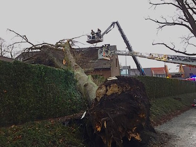 Today, a tree fell on a house in Wijnegem (photo: BFM)